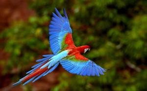 Add-on: Amazon rainforest