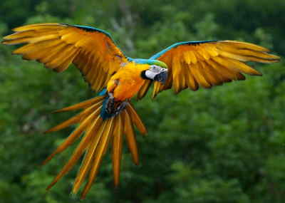 Visit the Amazon on a jungle tour by Southern Crossings.